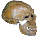 Should we Clone Neanderthals?