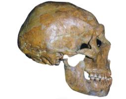 Should we Clone Neanderthals?